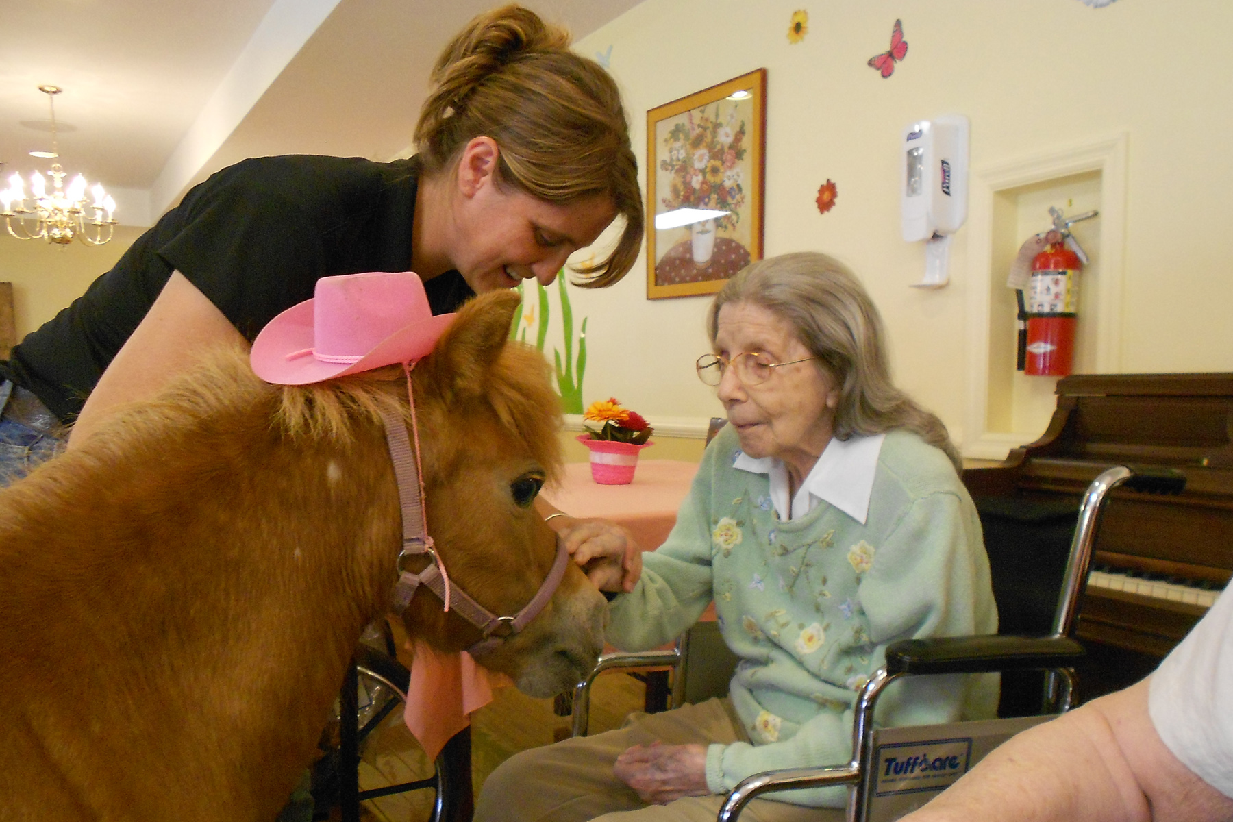 animal therapy Learn equine massage, canine massage, equine kinesiology taping, canine kinesiology taping and animal body alignment with our online certification courses courses.
